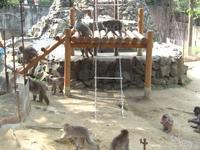 八木山 動物園、サル山の皆さん。早く飯くれ!って言ってます。