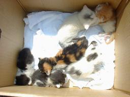 猫の赤ちゃん2
