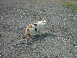 猫のお母さん?